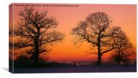Silhouette Of trees, Canvas Print
