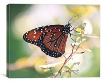 On The Wings of a Butterfly, Canvas Print