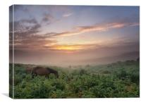 Misty New Forest Pony Sunrise, Canvas Print