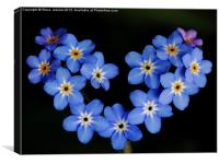 Forget me Not, Canvas Print