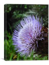 Ouch This is Spiky!, Canvas Print