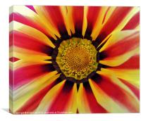 visions of colour 2, Canvas Print