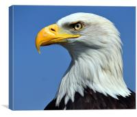 Eagle, Canvas Print