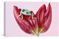 Red Eyed tree frog, Canvas Print
