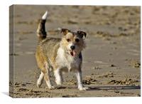 Berty Jack Russell, Canvas Print