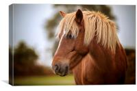 A beautiful red New Forest Pony, Canvas Print