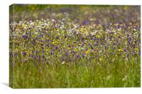 Wildflower Meadow, Canvas Print