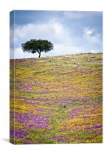 The Tree Up Wildflower Hill, Canvas Print