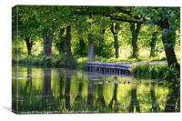 Spring reflections on Basingstoke Canal, Canvas Print