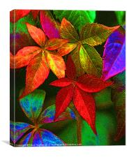 Vibrant multi coloured leaves, Canvas Print