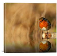 Robin red Breast (Erithacus rubecula), Canvas Print