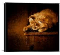 Watching and waiting, Canvas Print