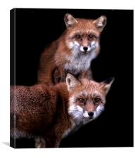 Foxy friends, Canvas Print