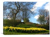 Lots of daffodils in a park, Canvas Print