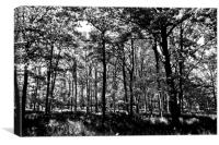 The Forest, Canvas Print