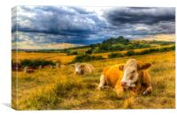 Resting Cows, Canvas Print