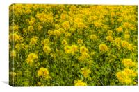 Yellow Fields Of Summer Abstract, Canvas Print
