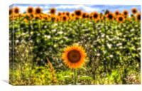 The Lonesome Sunflower, Canvas Print