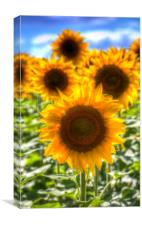 Sunflower Summer Days, Canvas Print