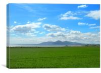 County Down in Summer, Canvas Print