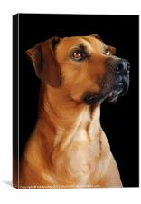 PROUD TO BE A RIDGEBACK, Canvas Print