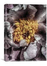 STAMENS OF A PEONY, Canvas Print