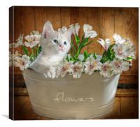 pretty kitty , Canvas Print