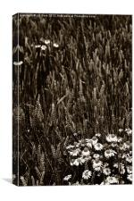 Flowers of the fields, Canvas Print