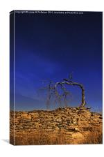 Nocturne with dead tree, Canvas Print