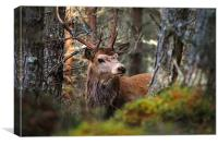 Red deer stag in the woods, Canvas Print