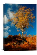Autumn Gold, Canvas Print