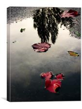 Mesmerizing Reflections after Rain, Canvas Print