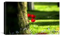 Tulips peeping from behind a tree, Canvas Print