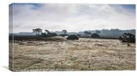 New Forest Panorama, Canvas Print
