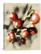 Berry Red Pic, Canvas Print