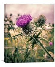 Thistle do Nicely, Canvas Print