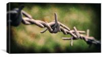 Closely Barbed, Canvas Print
