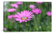 Pink single flower, Canvas Print