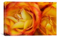 Twin Yellow Roses, Canvas Print