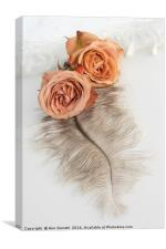 Two Old English Roses and Feather, Canvas Print