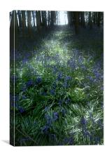 Bluebell Light, Canvas Print