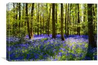 CARPET OF BLUEBELLS, Canvas Print