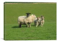 Sheep with Lambs, Canvas Print