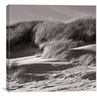 Sand Dunes in Sepia, Canvas Print