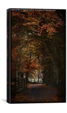 Scottish Woodland, Canvas Print