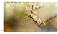 Blackthorn Flowers, Canvas Print
