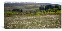 Cotton Grass and Gorse, Canvas Print