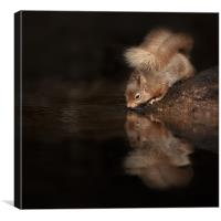 Red Squirrel Reflection, Canvas Print