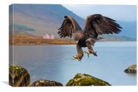 Golden Eagle, Canvas Print