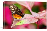 Hecales Longwing, Canvas Print
